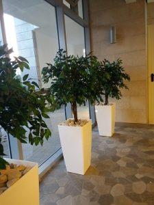 יופי בירוק - צמחיה מלאכותית ללובי 7