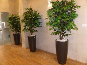 צמחייה מלאכותית ללובי 5