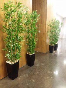 צמחיה מלאכותית 10