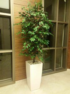 צמחיה מלאכותית 4