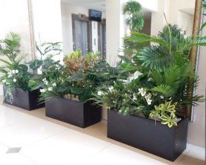 צמחיה מלאכותית 7